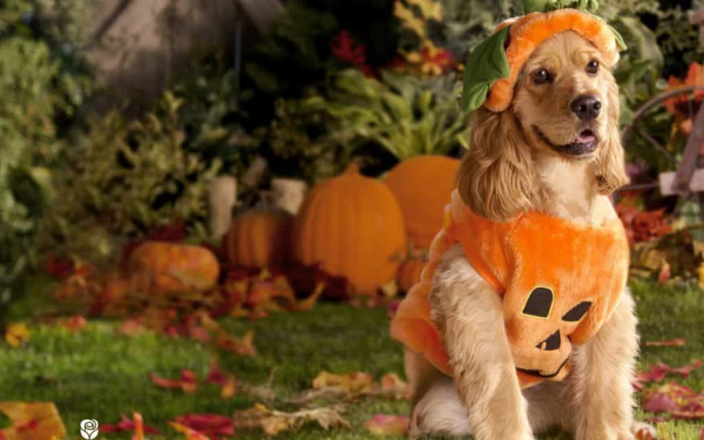 10 Best Dog Pumpkin Costumes Where To Find Them Scout Knows