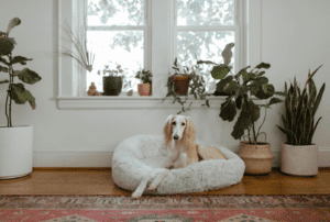 Best Dog Beds on Chewy
