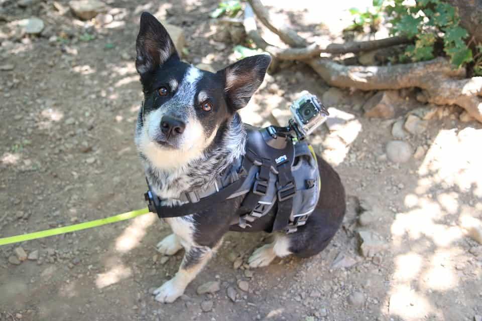 Best Dog Collar Camera