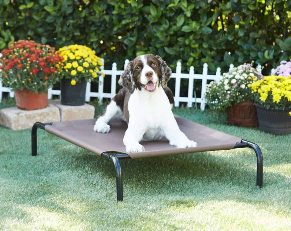 Best Dog Beds on Chewy: Frisco Steel-Framed Elevated Dog Bed