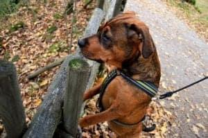 Best Dog Training Leash