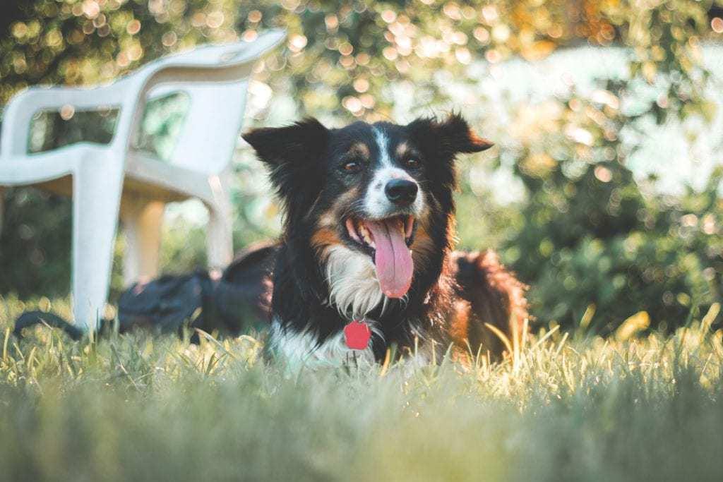Best Dog Pooper Scoopers