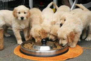 Best Dog Food For Weight Gain (link to Article: Best Weight Management Dog Food)