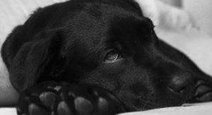 Sad Dog Close-up